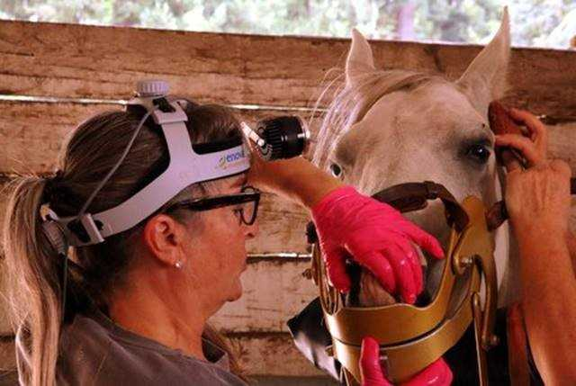 Equine Surgery | Enova Illumination